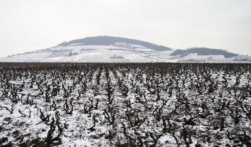 Beaujolais in Winter