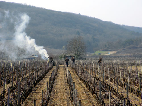 Burning vine prunings in Marsannay