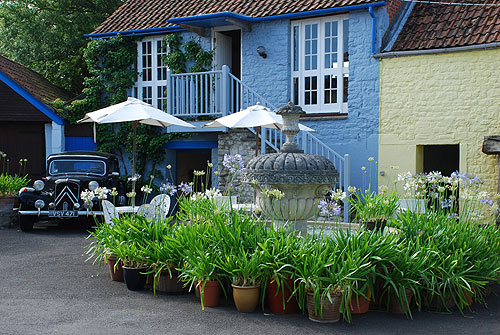 Traction and Agapanthus