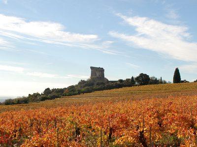 Rhône 2014 vintage report & en primeur offer