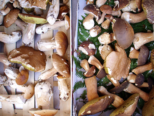 Ceps and mushrooms