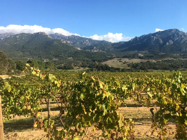 Domaine Saparale - Ortolo Valley - Sartène