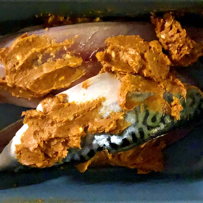devilled mackerel